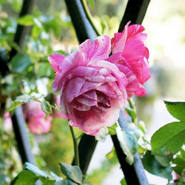Jardín Botánico de Valencia flor 1