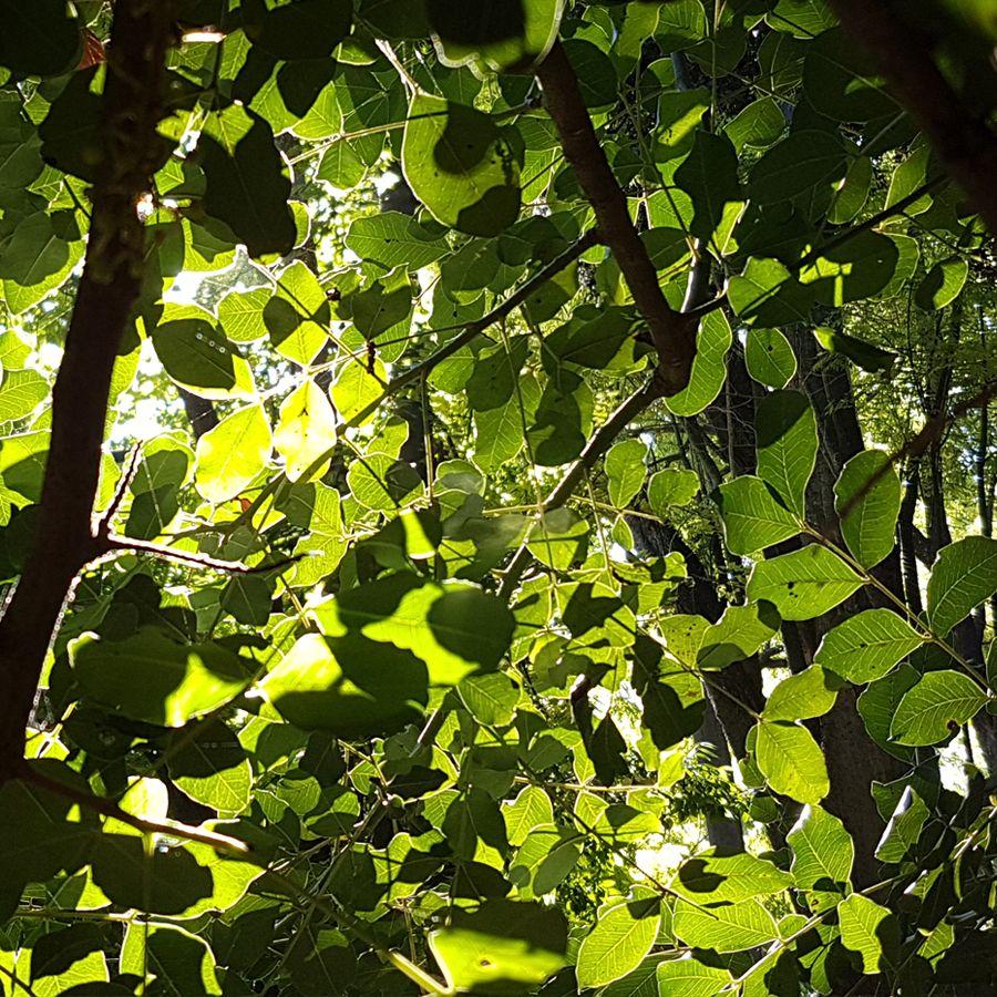 Jardín Botánico de Valencia planta 1